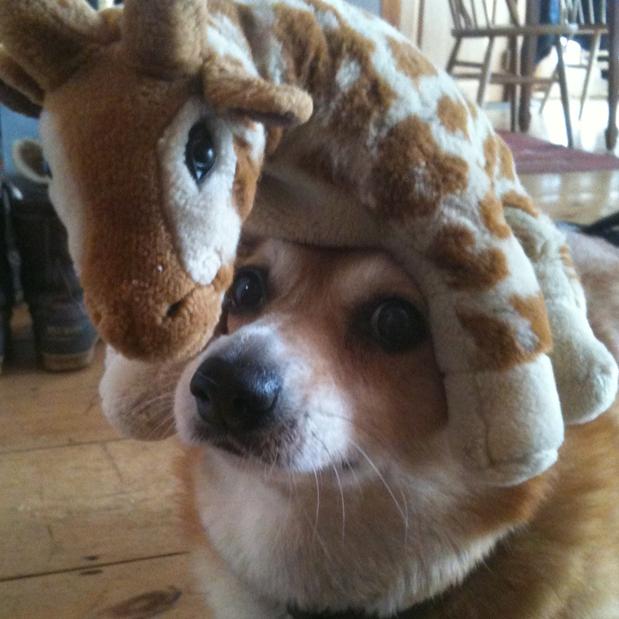 Giraffe dog - photo#27