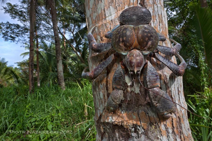Horseshoe Crab Mouth i Really Want a Horseshoe Crab