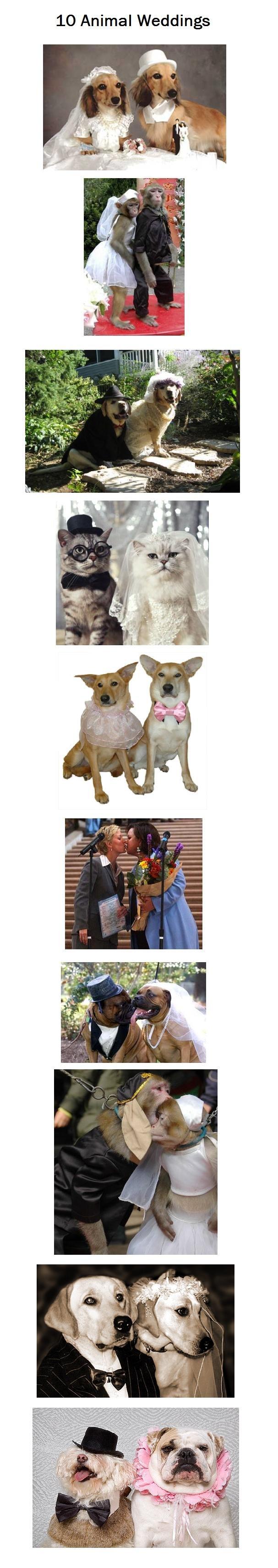 10 Animal Weddings. . 10 Animal Weddings. I love Rosie, In that last photo. Good Complitation