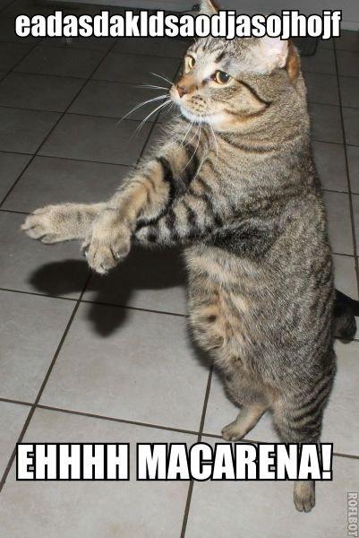 A cat. OC captions. asdadasdasd