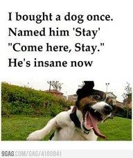A Dog's Crazy. .