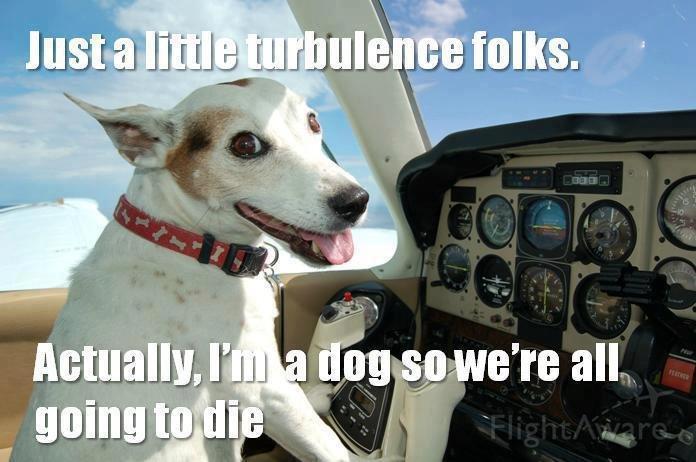 Actually im a dog........... lol. llg! it. k t Bills n. ISI