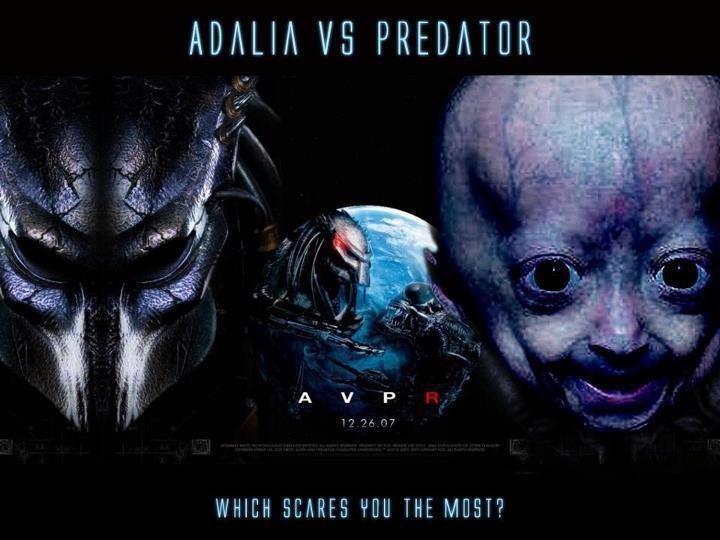 Adalia vs Predator.. . ADAM VS