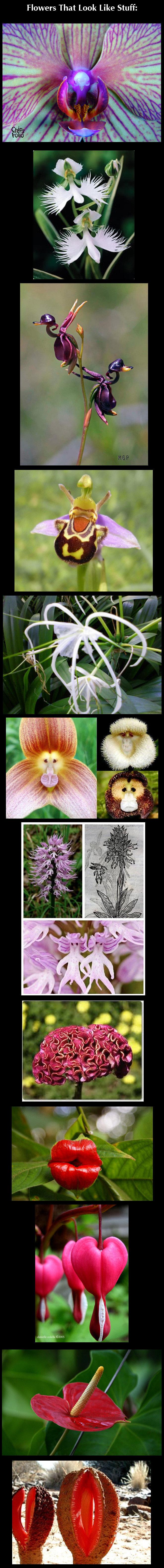 All Natural. . Flowers That Look Like Stuff: a, , tgat Ili