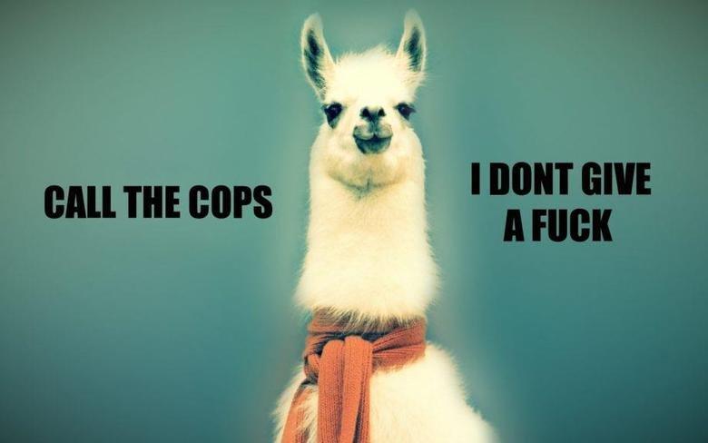 Alpaca don give a fuq. .