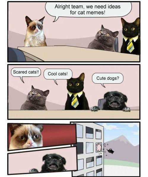 Alright team. . Alright team, we need ideas for cat memes! dca tall. Panda's?