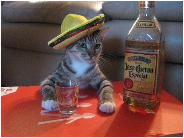 Amigo. She took all of da catnip....