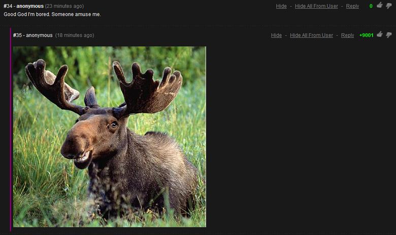 Amuse me. oolol. Good God I' m bored. Someone amuse me.. ITS OVER 9000!!!!! Amuse me a moose