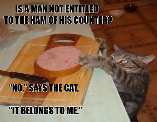 Andrew Ryan's Cat. It's true..