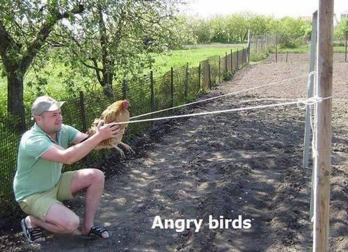 Angry Birds: Hood version. . Angry birds'