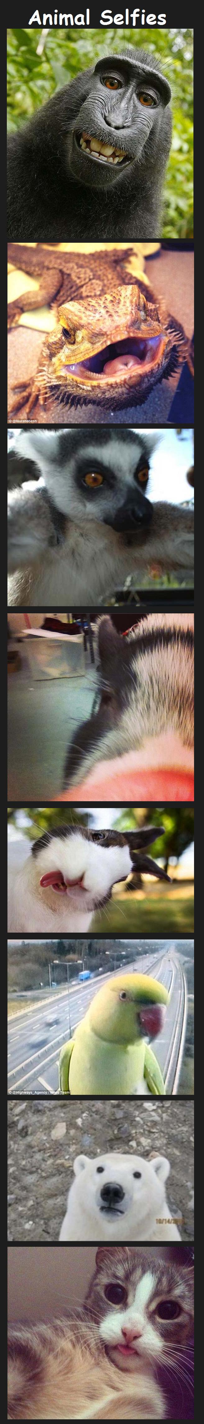 Animal Selfies Part 2. .. Part 1: