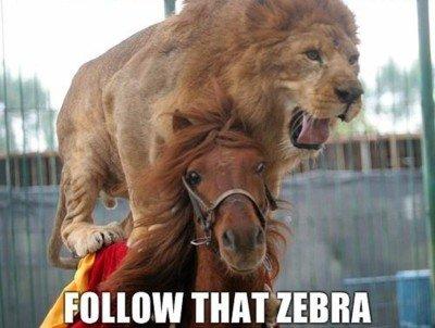 """animal transport. yes oh god yes!. g( j"""" THAT ZEBRA"""