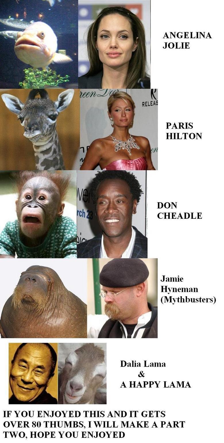 animal-celebrity PART 1. funnyjunk.com/funny_pictures/336452/animal+celebrity+PART+2/<br /> <br /> ^^^^^^^CHECK IT, PART 2 !!!!!!. ANGELINA JOLIE PA