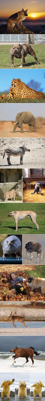ANIMALS WITHOUT NECKS!!!. .. you forgot one