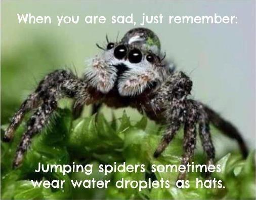 Aquatic Headgear. spider bro has style.