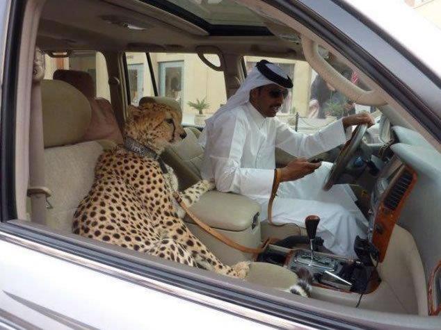 Arab Sheik. .. bestiality at its finest