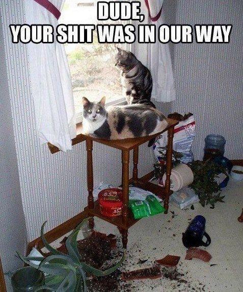 Asshole cats. .. CAAAATS! I love cats!