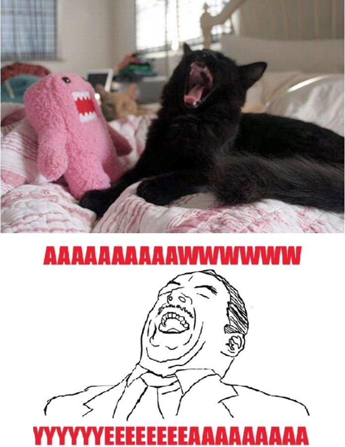 Awww yeaaaa kitten. Saw this kitten and im like AWWW YEA.