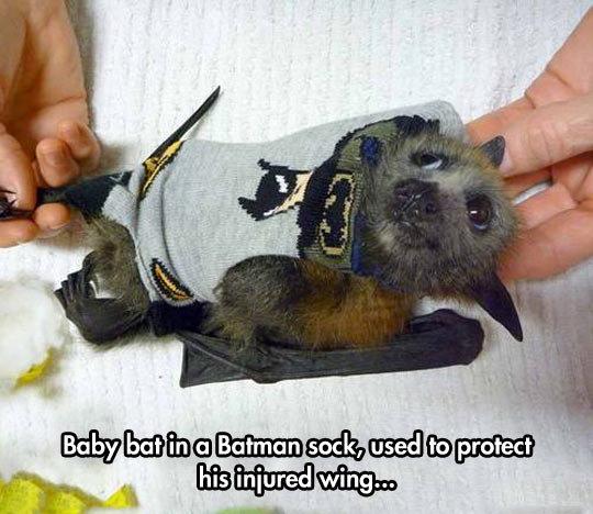 Baby Batman Bat. Baby Batman Bat isfunny.net/keep-smiling-every-day/.. I am: Bat Bat