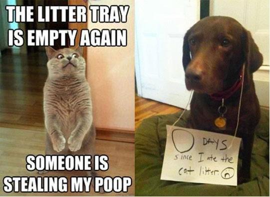 Bad Dog. . HE THAN IS mm manna wtt' miimii' IS i MY Poor