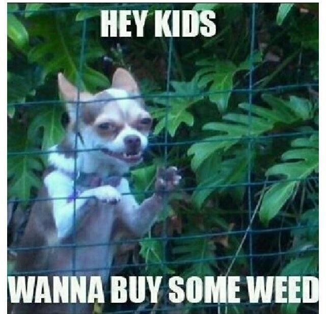 Bad influence dog. .