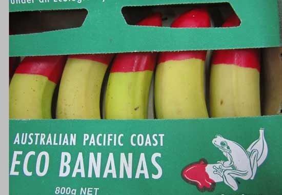 Banana Fail. Get it?. AUSTRALIAN PACIFIC COAST ECO BANANAS A Mott NET. Who knew OP special ordered his bananas? Bananas