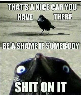 BastIRD. crows. Bird meme car