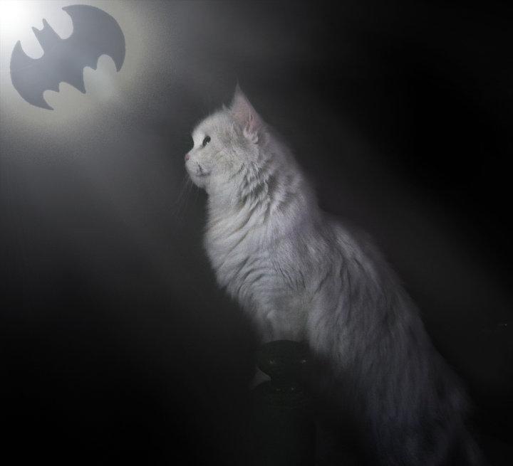 Bat Cat. .