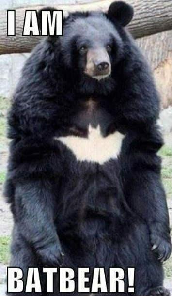 Batbear. Not sure if repost. Source: www.facebook.com/TimmyEffingTurner. a, imagi. I am the hero Catham deserves
