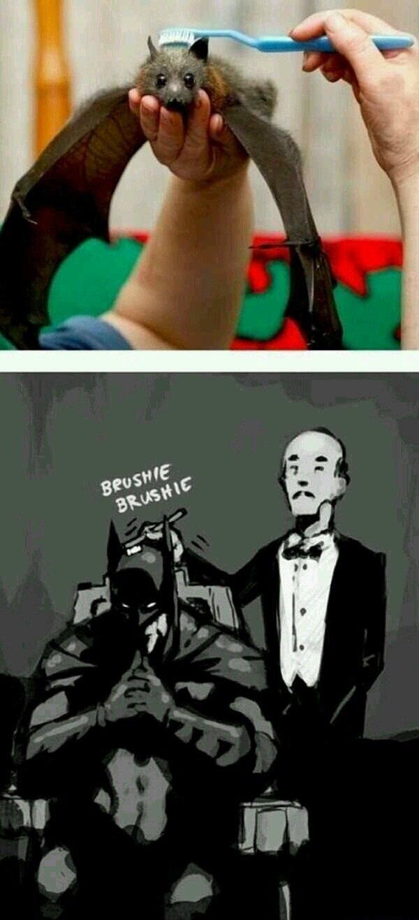 Bats. .