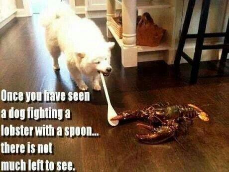 battle of epic gods!!!. . Ilium is nut much lama an gods Lobster Ace repost battle death sickkickers kill spoon mcgunner