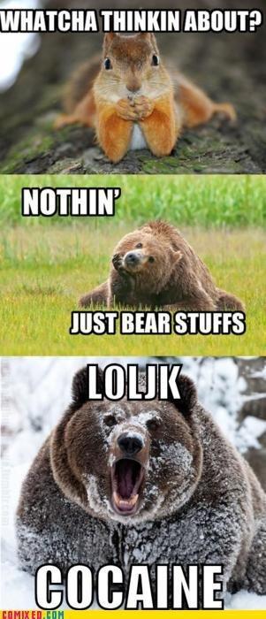 Bear stuffs. . HIST ,