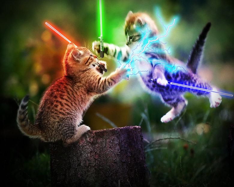 <b>Cat</b> Funny <b>Wallpaper</b> For <b>Desktop</b> and Mobile Free Download   HD ...