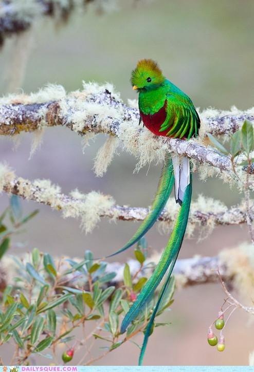 Beautiful Birdy. . llam