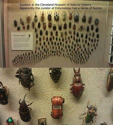 Beetles. .. <--- Explains the failure