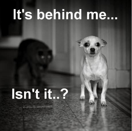 Behind me?. lol. It' s behind me.... ...... lol funny