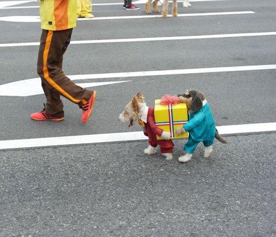 Best Dog Costume Ever. .