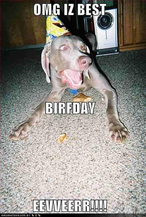 Best Birfday Evver. Hi, I hate you. clue I! ans] Dog cat funny epic bored