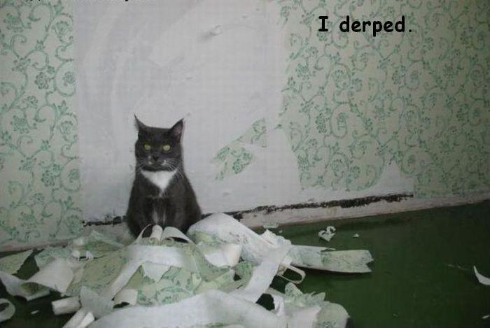 best derp yet. my finest work i must say. OC derped derp cat
