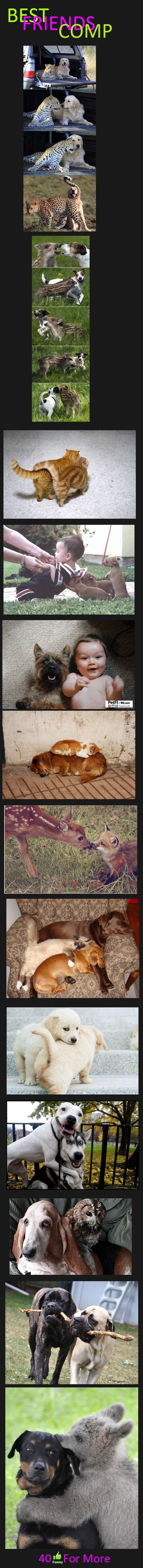 Best Friends!. Best friends part 2 and 3! funnyjunk.com/funny_pictures/2593752/Best+Friends+2/ funnyjunk.com/funny_pictures/2595143/Best+Friends+3/. BEST. Finally, they understand our love. best friends Animals