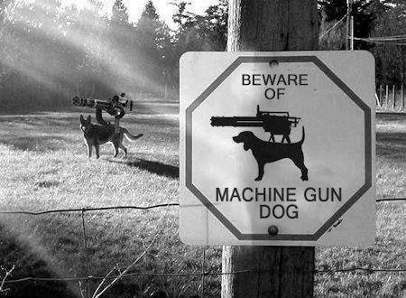 Beware Of Machine Gun Dog. King Crimson is a cool band. DAG Dogs machine guns