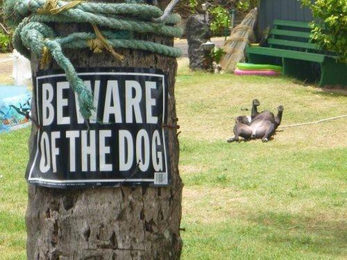 Beware the dog. .