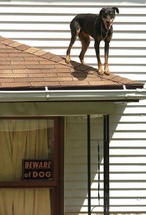 beware of dog. . beware of Dog fail