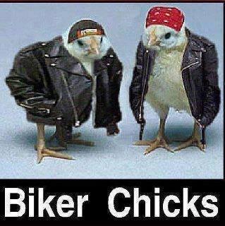 Biker Chick. Source: Imgur. Biker Chicks. Rollin Chicks