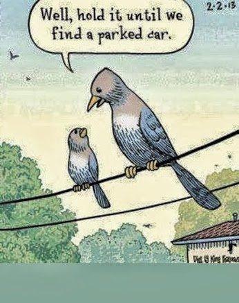 Bird Shit 2. Source: Imgur.