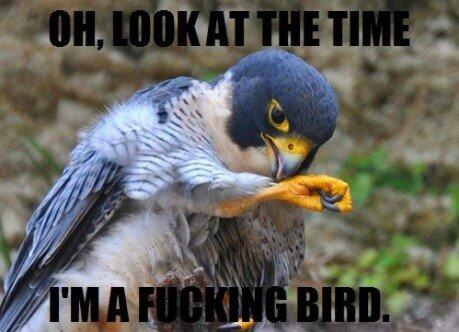 Bird. .