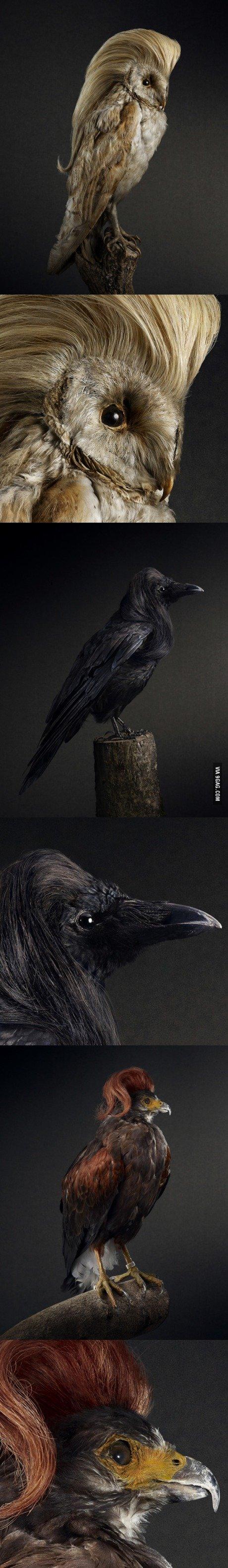 Birds with amazing hair.. .