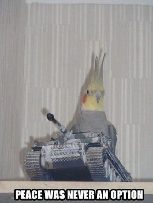 birds. . I in. whenever you spawn near Montezuma in civilization