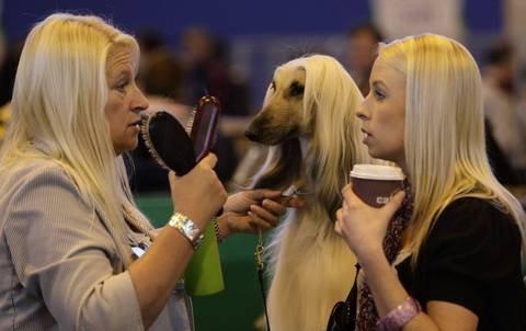 Blondies. .. Dammit Duchess! Get away from those skanks.