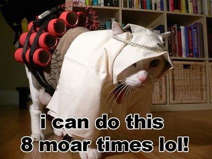 Bomber Cat. . cat Bomber Suicide